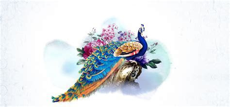 Peacock Flowers Background, Peacock, Flowers, Chinese
