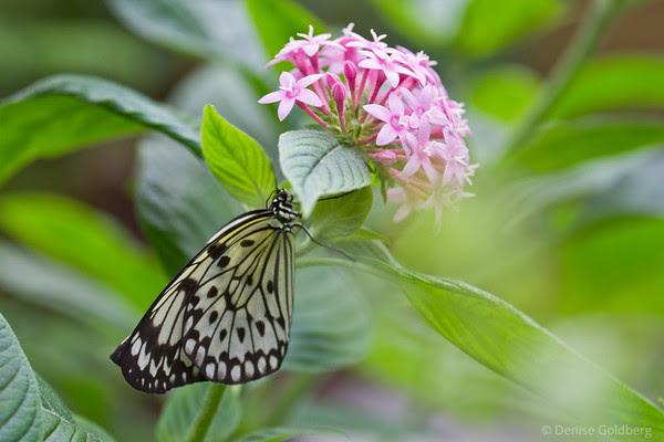 butterfly under flower