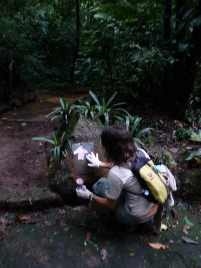 Sinalização de trilhas no Parque Nacional da Serra dos Órgãos. Foto: Pedro da Cunha e Menezes.