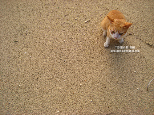 sand and cat wallpaper