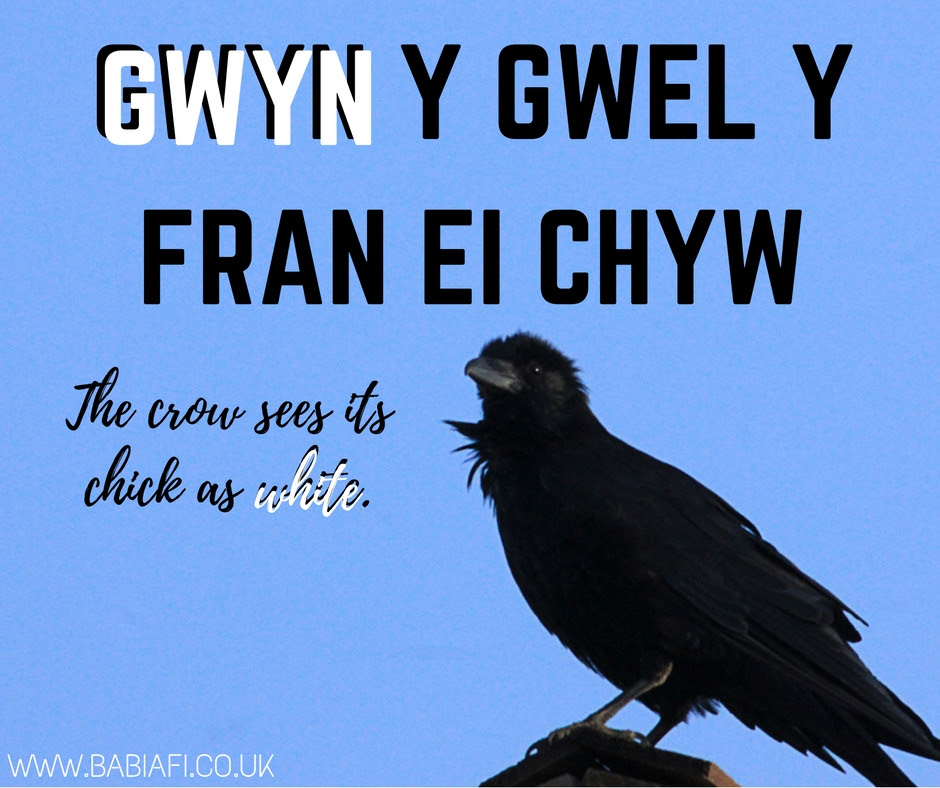 Gwyn y gwel y fran ei chyw - the crow sees its chick as white.