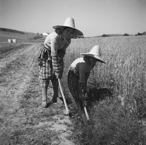 Alentejo, retratos do mundo agrícola.