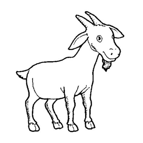 Gambar Menggambar Domba Garut Kuas Ajaib Trans7 Advertisements