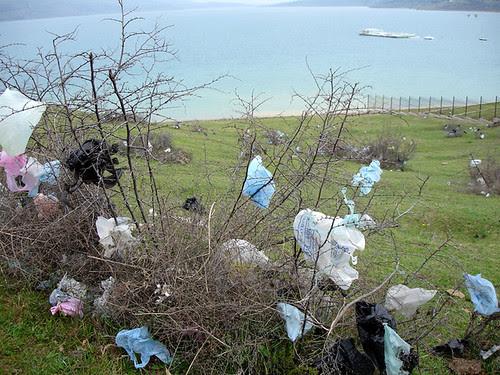 Lake and litter