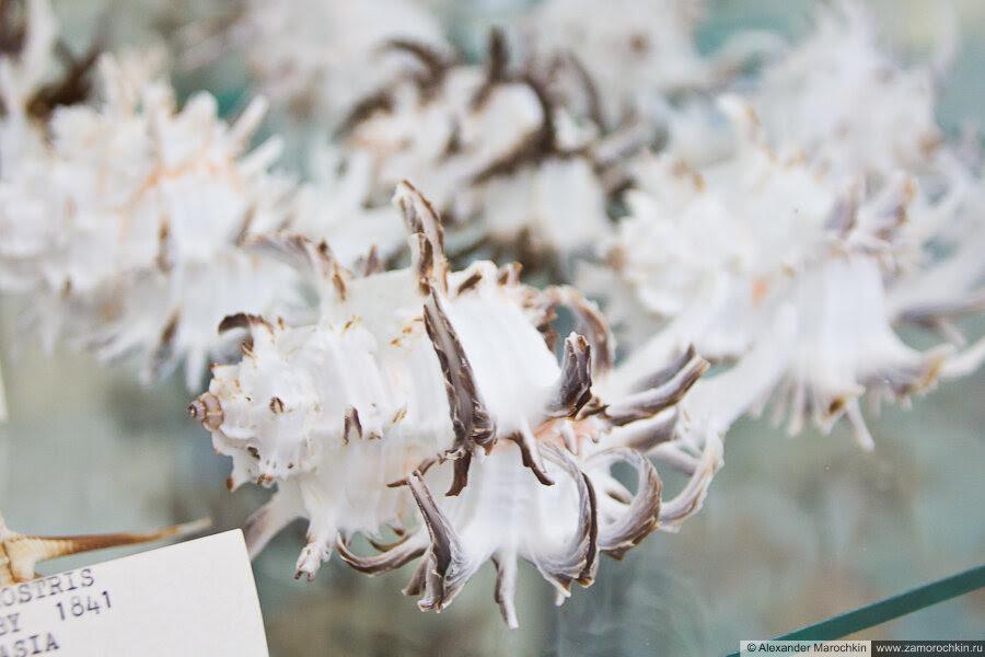 Раковины моллюсков в экспозиции музея ракушек Корфу