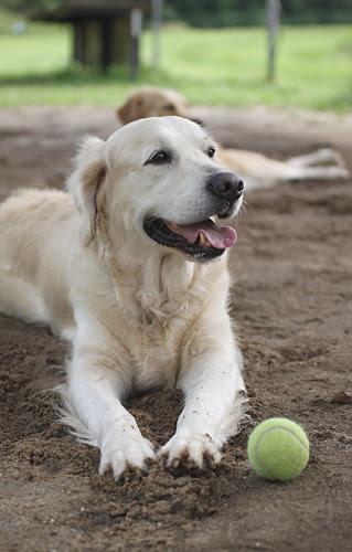 My doggie Nova