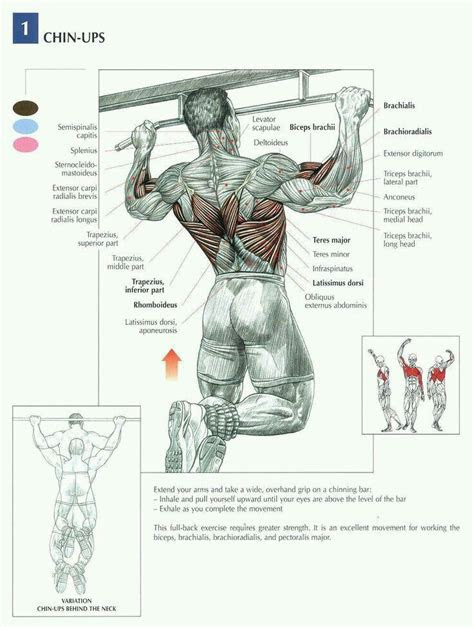 chin ups   muscles  benefits pull  workout