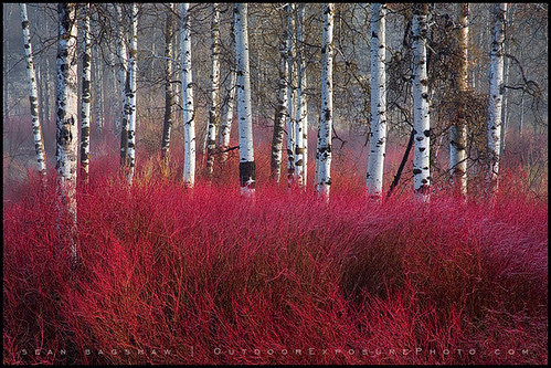 Red Willow Sea por Sean Bagshaw