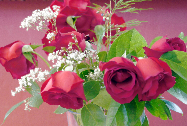 Never Waste A Good Rose Amalux Blog