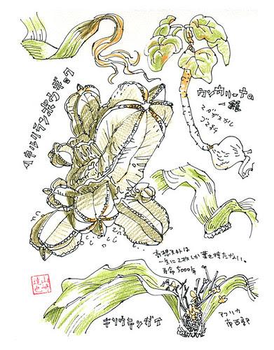 The Sakuya Konohana Kan2 by yamasakki
