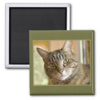 Gray Tabby Close Up Photograph magnet