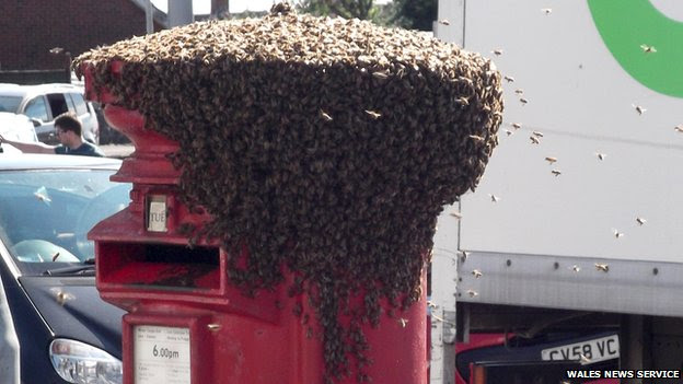 Bees on a postbox