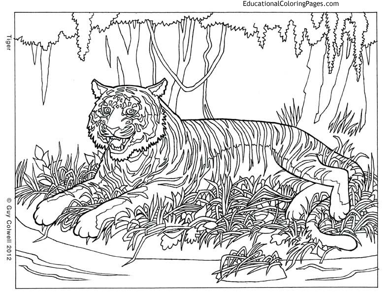 Detailed Animal Colouring Pages Coloring And Drawing