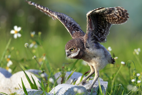 Learning To Fly... by Megan Lorenz