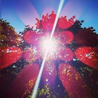 Good Sunny Morning! #sun #trees #sky #newengland