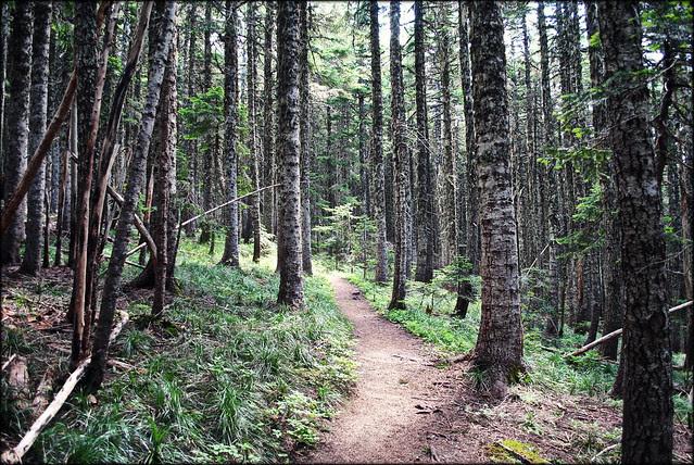 Bald Mountain - Mt. Hood