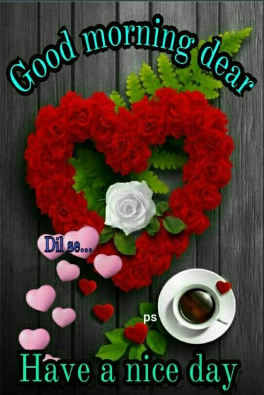 Good Morning Dear Have A Nice Day Pictures Photos And Images For