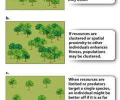 Ecological Relationships Worksheet Quizlet - worksheet