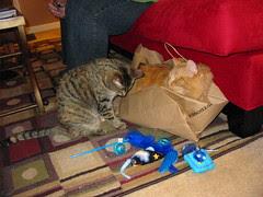 Jasper in the bag
