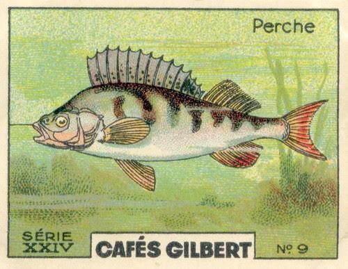 gilbert rivière 9