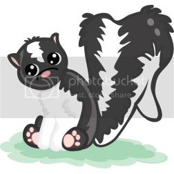 cute skunk Pictures, Images and Photos