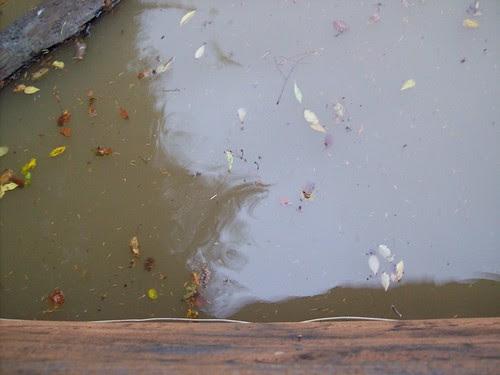 flood 2009