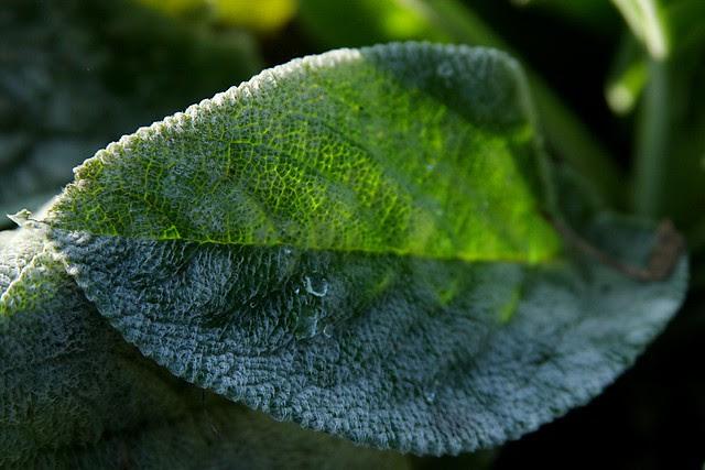 leaf, portland memory garden