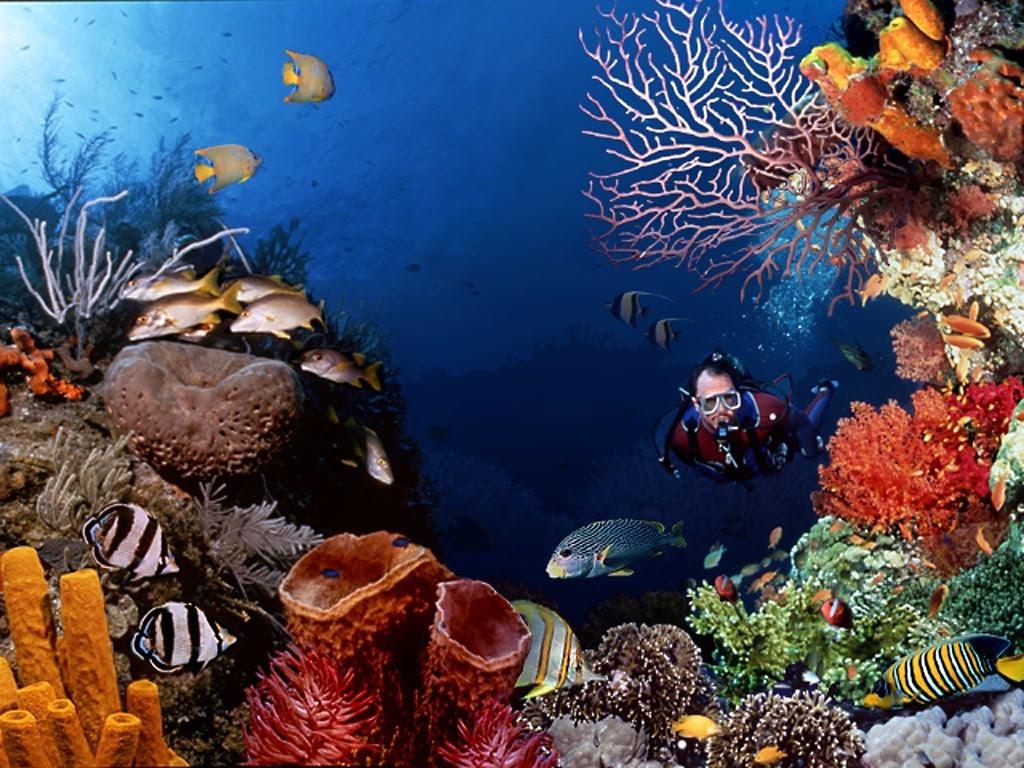 Marine Life Sea Life Wallpaper 7591180 Fanpop
