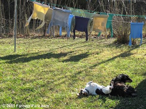 Bert and Bear on laundry duty 2 - FarmgirlFare.com
