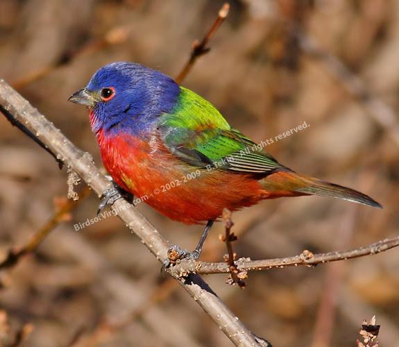 cornell bird watch