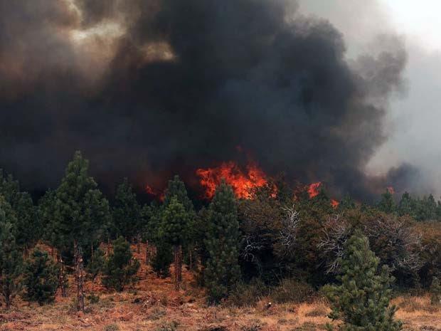 Incêndio atinge floresta em Chubut, no sul da Argentina, neste domingo (1) (Foto: AFP Photo/Telam/Jose Romero Argentina Out)