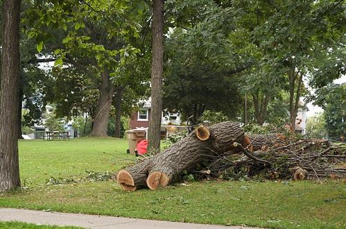 Tree Down at Orton