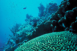 English: Coral Reef in Florida by Jerry Reid, ...