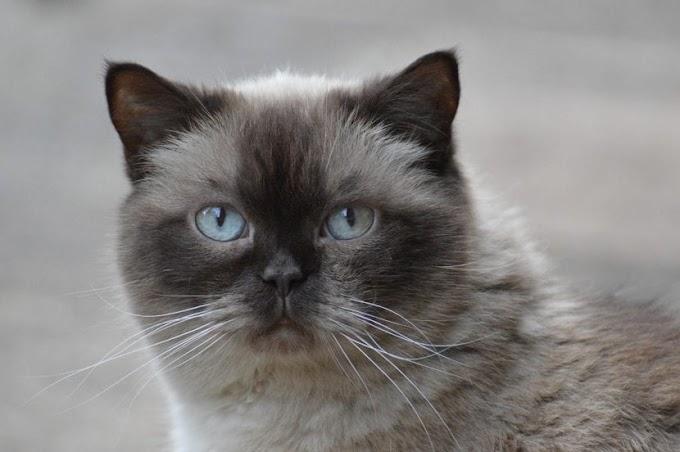 Leishmaniasis en gatos, una enfermedad peligrosa y desconocida