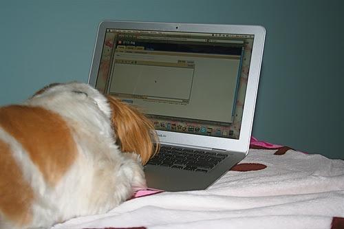 wonton blogging