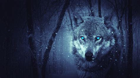 wolf art wallpaper  images