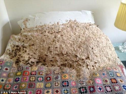 σφήκα-έχτισε-τη-φωλιά-της-μέσα-σε-κρεβάτι-1
