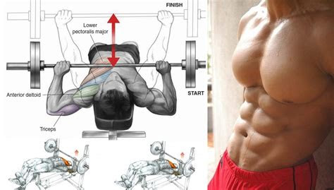 bigger chest  decline bench press bodydulding