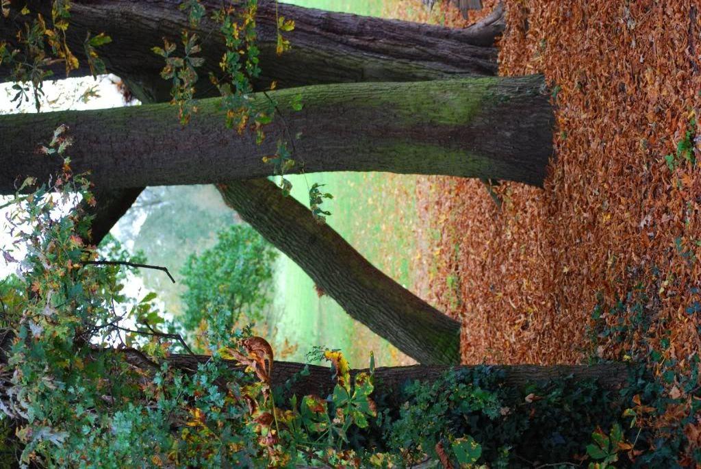 ABC Woods