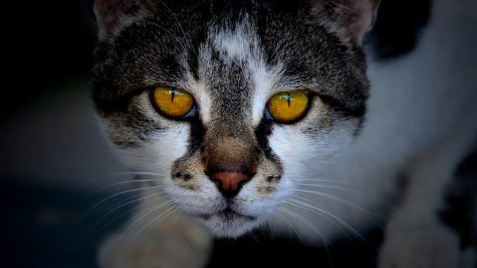Katzenbilder - Lustige & schöne Katzen Bilder ...