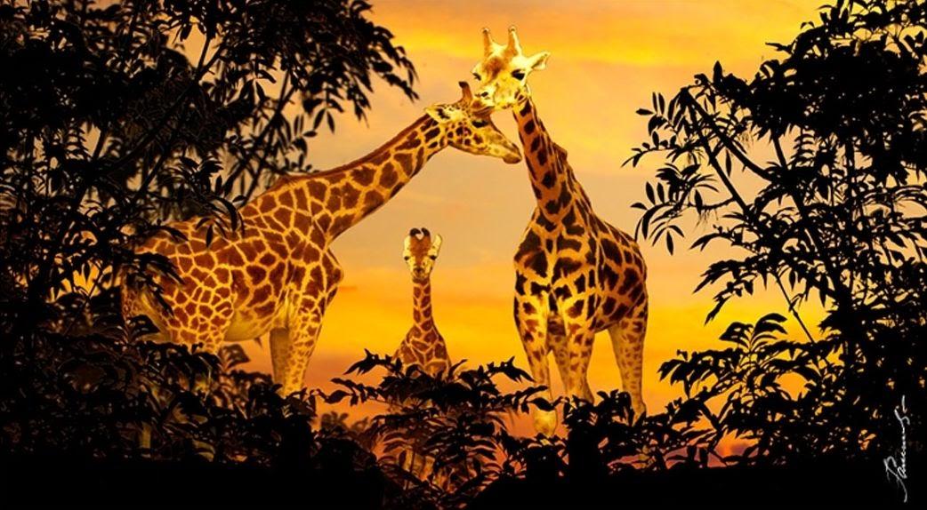34 bilder afrika tiere  besten bilder von ausmalbilder