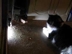 Josie studies the light from under the garage door