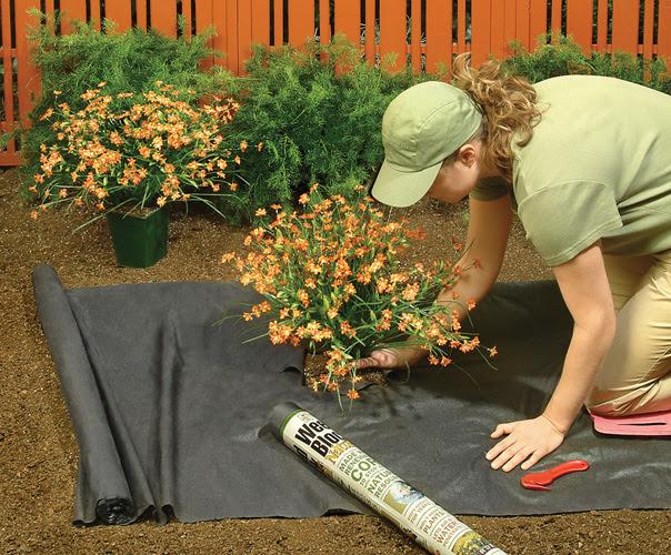 plantando en la grava