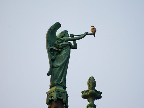 Gabriel and Red-Tail Hawk