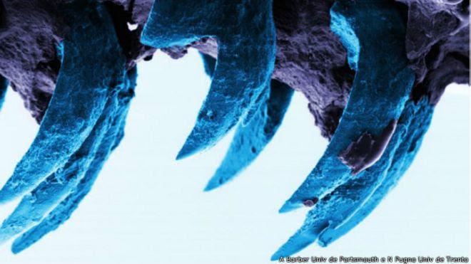 Imagem microscópia de dente de molusco (Univ. de Southampton)