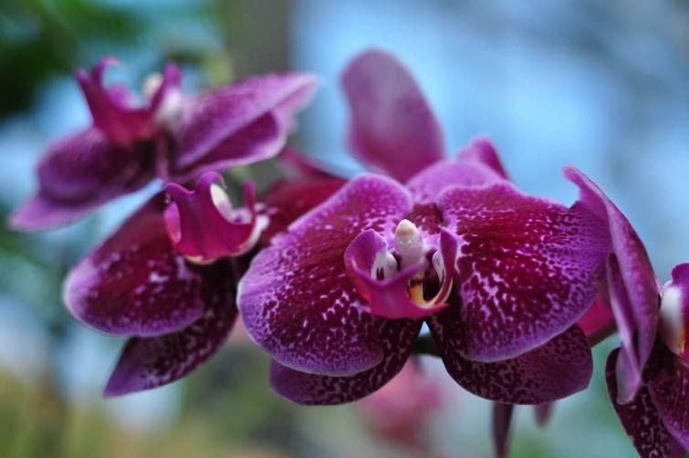 As maravilhosas flores na estufa do Longwood Gardens, na Pennsylvania - Estados Unidos