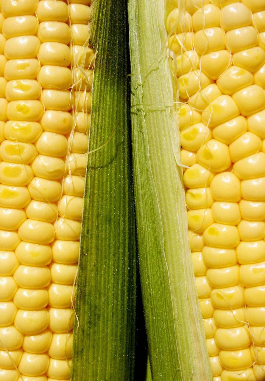cooking frozen corn in husk in microwave