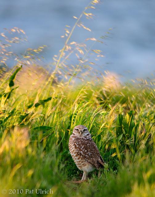 Late light, tall grass