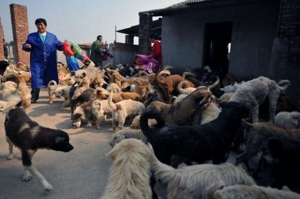 Perierga.gr - Το μεγαλύτερο καταφύγιο αδέσποτων ζώων!