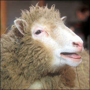 http://dontdatethatdude.files.wordpress.com/2008/03/dolly-the-sheep.jpg